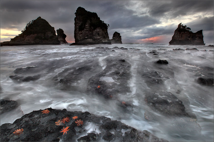 Starfish colonies on the dangerous low tide coastline of Motukiekie Beach with sea stacks at sunset on New Zealand's west coast