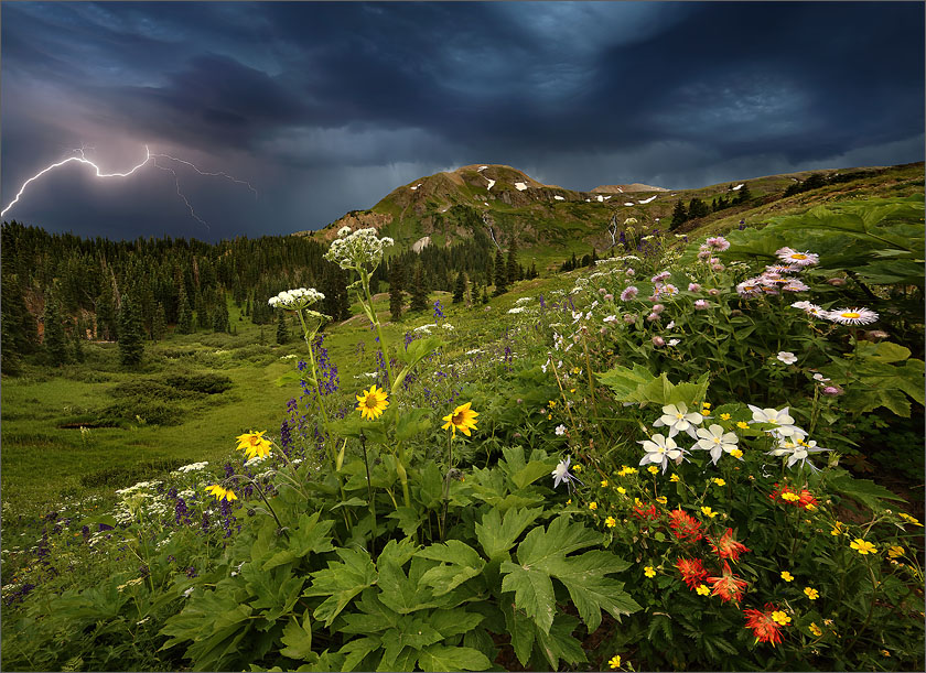 The wildflowers of the Rocky Mountains in a lightning storm near Silverton.